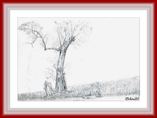 landscap.jpg (36194 bytes)
